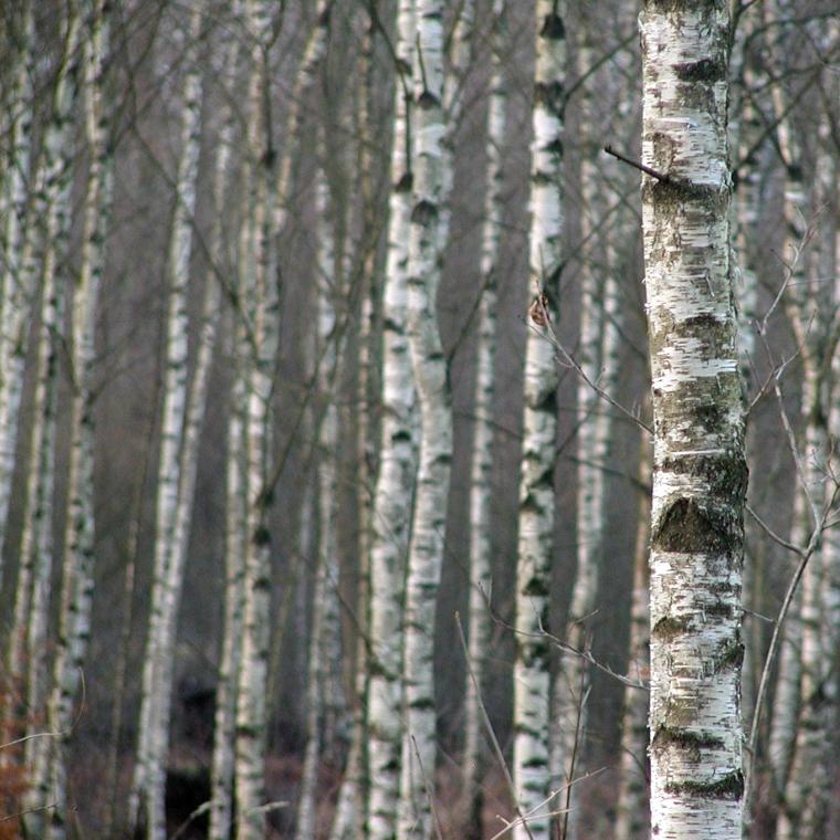 05 Zweden 2006.jpg